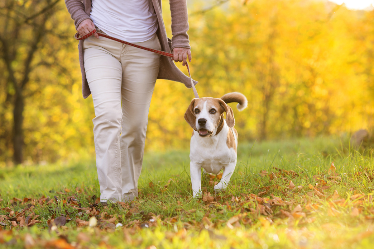 Dog friendly walking routes Wakefield